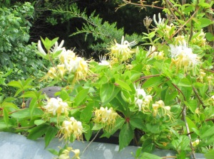 Great Bay - honeysuckles
