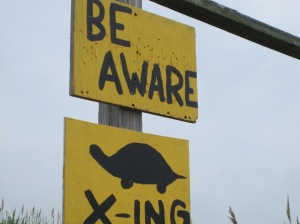 Great Bay Turtle X-ing Be Aware