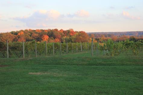old-york-cellers-vineyard-ringoes-nj